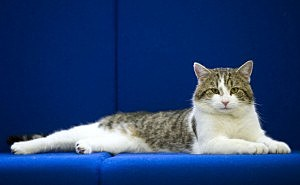 Larry The New Downing Street Cat Arrives At His New Home