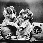 Revelling Pups