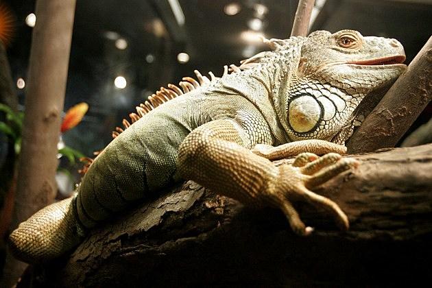 Reptile Expo
